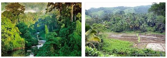 Sinharaja Forest (World Heritage)